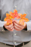 Hands holding leaves Stock Photos