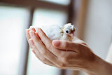 Hands holding little  pigeon. Consept of innocence Royalty Free Stock Photos