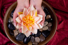Hands holding lotus flower Stock Images