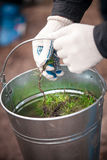 Hands holding metal bucket full of tree sprouts Royalty Free Stock Image