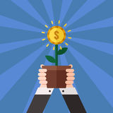 Hands holding money flower in pot vector illustration (poster). Royalty Free Stock Image
