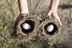 Hands holding nest with egg. Stock Photography