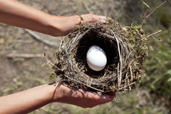 Hands holding nest with egg. Stock Images