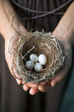 Hands holding nest with eggs Royalty Free Stock Image