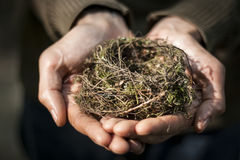 Hands holding a nest Stock Image
