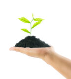 Hands holding new life plant Royalty Free Stock Images