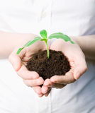 Hands holding a new plant Stock Image