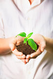 Hands holding a new plant Royalty Free Stock Photography