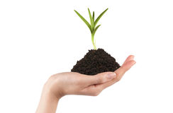 Hands holding a new tree Stock Image