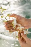 Hands holding orchids. Royalty Free Stock Photography