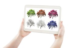 Hands holding pc tablet with set of season tree. Isolated on white Royalty Free Stock Images