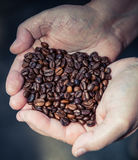 Hands holding pile of roasted coffee Stock Image