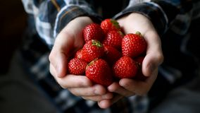 Hands holding pile of strawberries