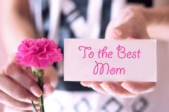 Hands holding a pink carnation flower with greeting card. Royalty Free Stock Images