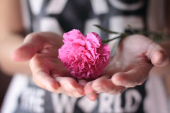 Hands holding a pink carnation flower. Royalty Free Stock Photo