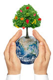 Hands holding the planet Earth with a tree and fruit . Royalty Free Stock Images