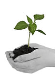 Hands holding a plant Stock Images