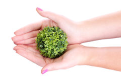 Hands holding plant Stock Images