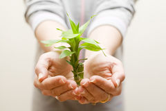 Hands holding a plant. Two female hands holding a beautiful green plant Stock Images