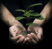 Hands holding a plant. Hands holding baby plant on a dark almost black background. The image could symbolize many things like: beginning, growth, development Royalty Free Stock Photo