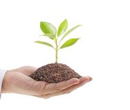 Hands holding plant Royalty Free Stock Images