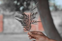Hands holding plant - DreamsTime royalty free stock photos