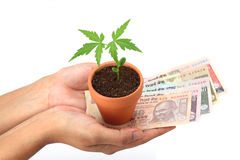Hands holding plant and Indian currency Stock Images