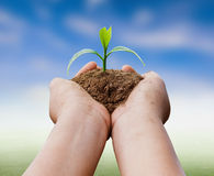hands holding plant over nature background Royalty Free Stock Images