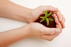 Hands holding a plant and some soil Stock Photos