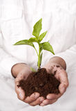 Hands holding plant sprouting from the soil Royalty Free Stock Images