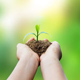 Hands holding plant and sunlight blur background Royalty Free Stock Photos
