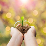 hands holding plant and sunlight Stock Photography