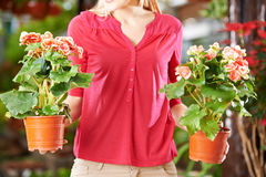 Hands holding pots with eliator begonia Royalty Free Stock Images