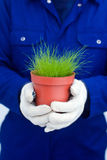 Hands holding potted green grass Stock Photo