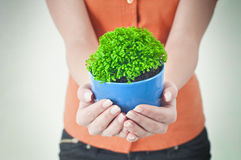 Hands holding potted plant Stock Images