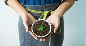 Hands holding potted plant Royalty Free Stock Photo