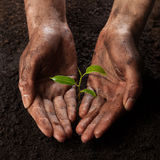 Hands holding and protecting a young green plant Stock Image