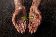 Hands holding and protecting a young green plant Stock Photo