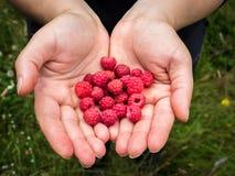 Hands holding raspberries. Close up of fresh organic sweet berries. stock photo