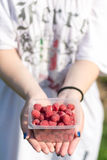 Hands holding raspberries. In female hands lay a bunch of ripe delicious fresh raspberries Stock Image