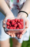 Hands holding raspberries. In female hands lay a bunch of ripe delicious fresh raspberries Royalty Free Stock Images