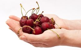 Hands holding red cherry Stock Images