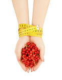 Hands holding red currant Royalty Free Stock Photos