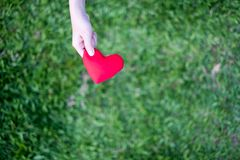 Hands holding red heart with green grass background. Concept Give love royalty free stock photography