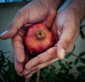 Hands holding Red pomegranate fruit Royalty Free Stock Images