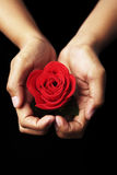 Hands holding red rose Stock Photo