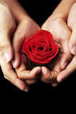 Hands holding red rose Royalty Free Stock Photography