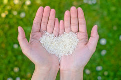 Hands holding rice Royalty Free Stock Images