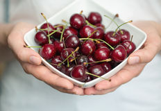 Hands holding ripe cherries Royalty Free Stock Photo