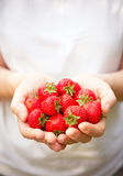 Hands Holding Ripe Strawberries Royalty Free Stock Image